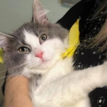 Furry Friday:  Martini Is Up For Adoption at Portsmouth Humane Society