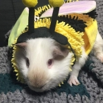 Today is National Dress Up Your Pet Day!