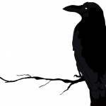 Thousands of Crows Take Over a Houston Parking Lot. ~ CASH {Video}