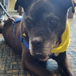 Bob is Up for Adoption with Portsmouth Humane Society