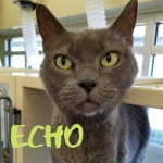 Echo Has Been At Chesapeake Animal Services Since January Waiting For a Home