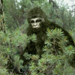 Bigfoot Spotted Looking Through Colorado Man's Window! ~ CASH {Pic}