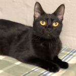 Furry Friday: Coconut Needs a Fur-Ever Home {PICS and VIDEO}