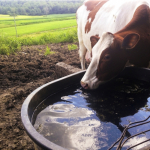 People are Using Cattle Troughs as Backyard Pools This Summer {PICS}
