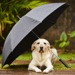 Security Guard in Scotland Goes Viral For Holding Umbrella Over Dog's Head in the Rain [PIC]
