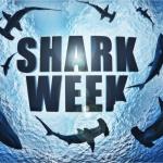 Dream Job Alert for Shark Week Fans!