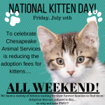 Furry Friday: Celebrate National Kitten Day all Weekend With Adoption Specials!