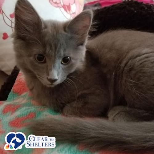 Furry Friday: Mama Cocoa and Tootsie Roll Are Up For Adoption with P.A.W.S {PICS and VIDEO}
