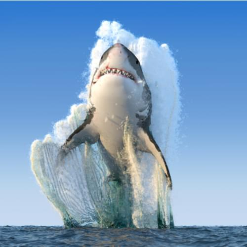 Record-Breaking Shark Breach Will Blow You Away! ~ CASH {Watch}