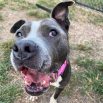 Furry Friday: Ethel is 7 years young and needs to find her fur-ever home!
