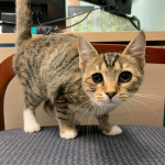 Furry Friday: Noodles is a 4-5 Month Old Kitten Who Needs a Home!