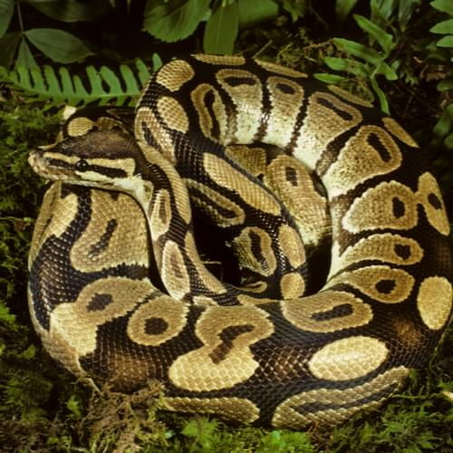 python short