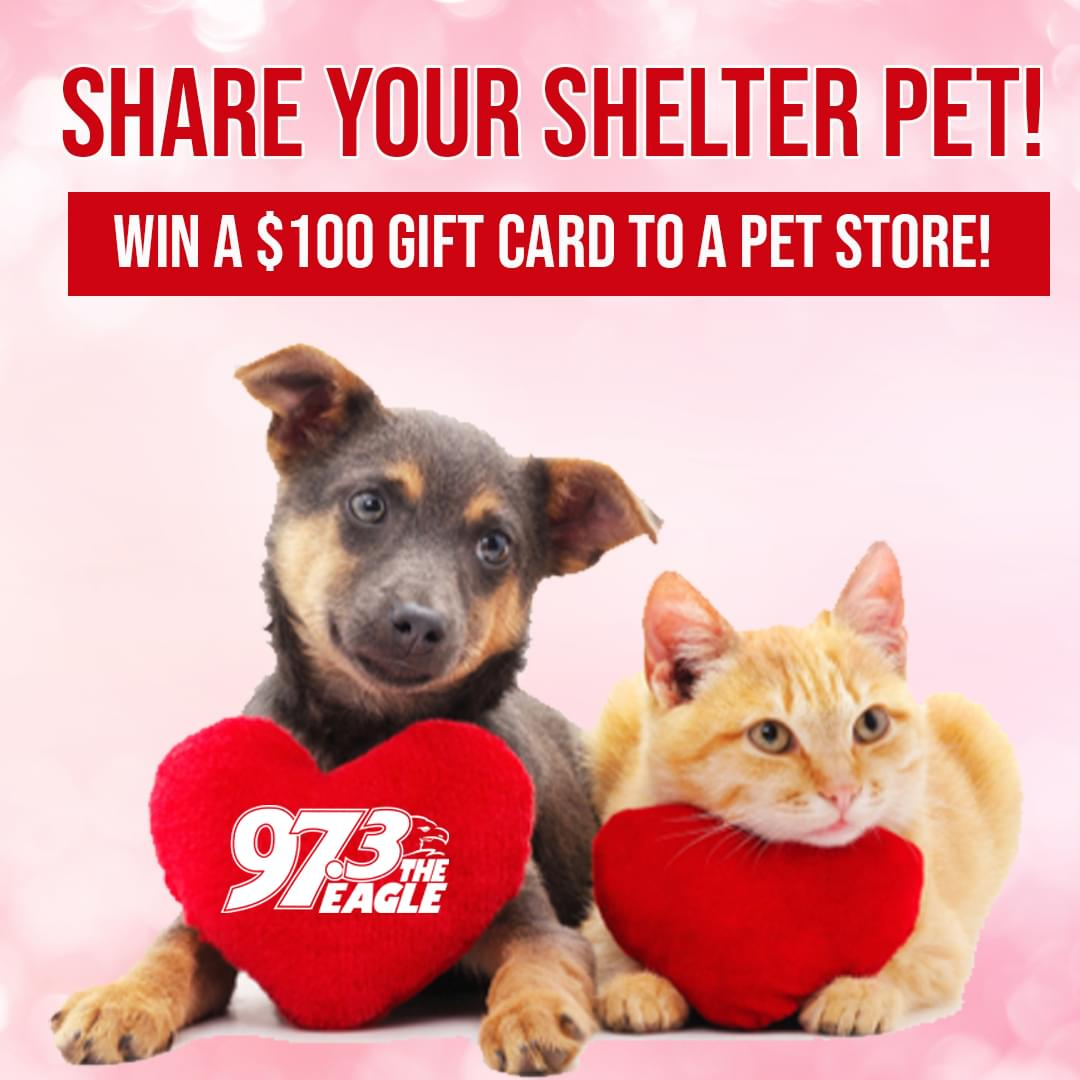 Share Your Shelter Pet IG