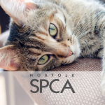 Norfolk SPCA to Open Low Cost Spay/Neuter Clinic in June