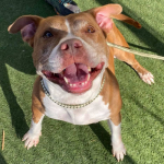 Furry Friday: Cinnamon is Up For Adoption at Chesapeake Animal Services