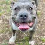 Furry Friday: Stella is a 3-Year-Old Couch Potato Looking For a Lazy Family to Love Her