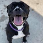 Furry Friday: Bornite is Up for Adoption at Peninsula Regional Animal Shelter