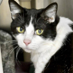 Nosy is Up For Adoption After Being Found Living Inside a Wall After Her Owner Passed Away.