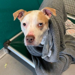 Furry Friday: Funny Girl Clancy Needs a Home