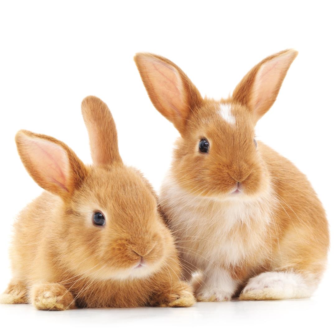 Good News for Local Baby Bunnies!