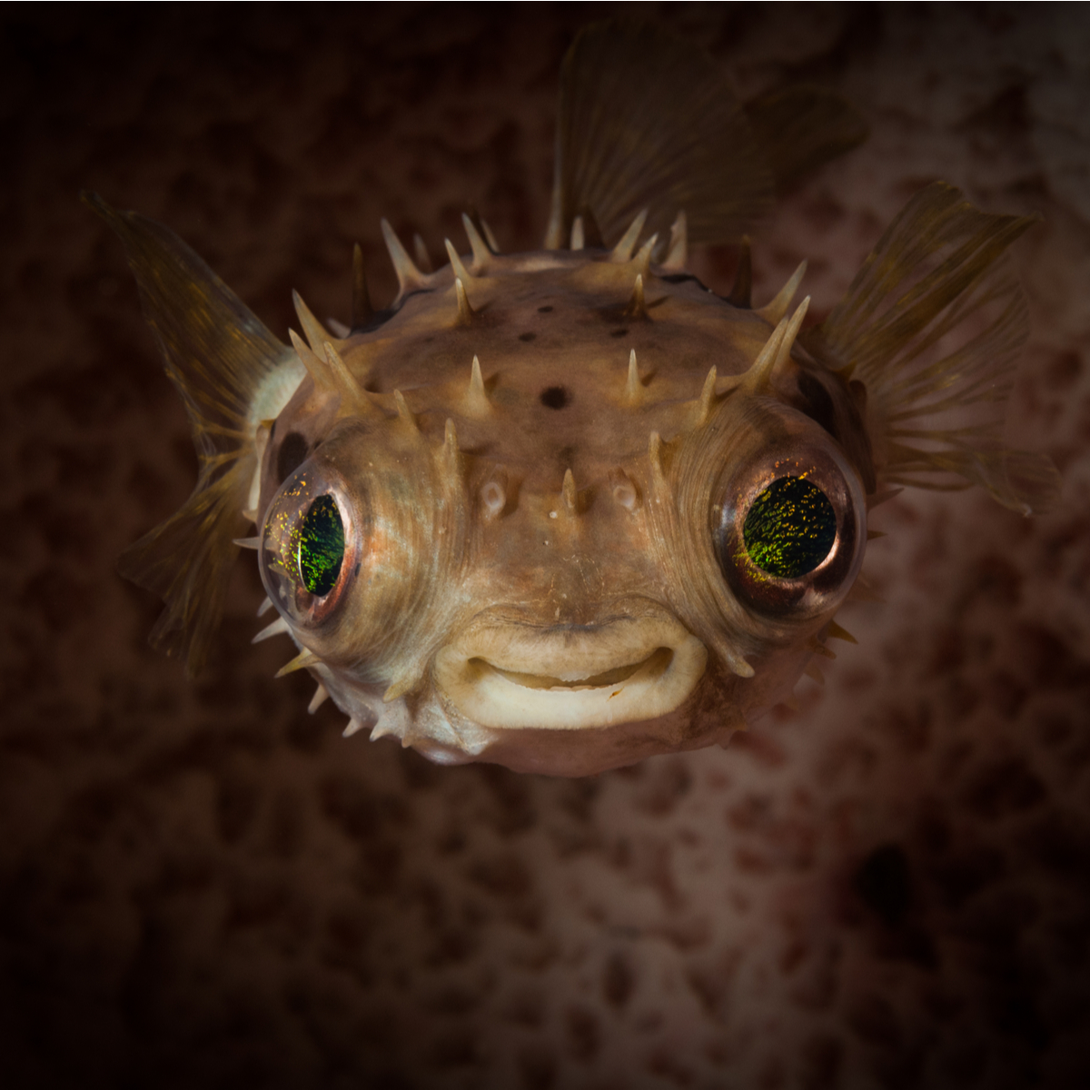 Fish with a beautiful set of pearly whites, smiles for the camera. {Pic}