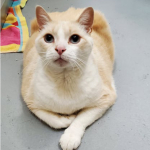 At 20 lbs, Stu Has a Lot of Love to Give; Meet This Sweet Boy Looking For a Forever Home