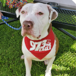 Waylon Has Been at the Norfolk SPCA For Over a Year! Can You Help Him Find A Home?