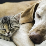 This giant dog comforting this rescue kitten is everything. Awww.