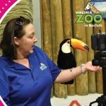 Virtual Classroom with the Virginia Zoo