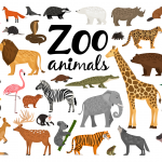 Learn About Tigers, Giraffes and More with Free Activity Sheets from the Virginia Zoo