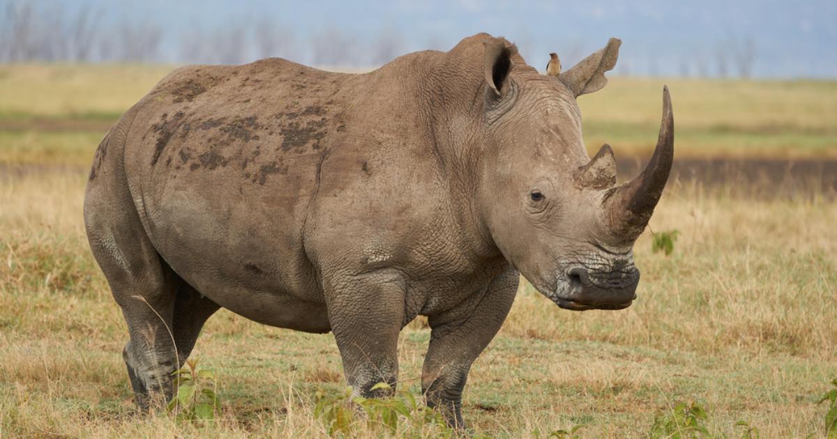 Meet the Virginia Zoo's New Baby Rhino! {PICS}