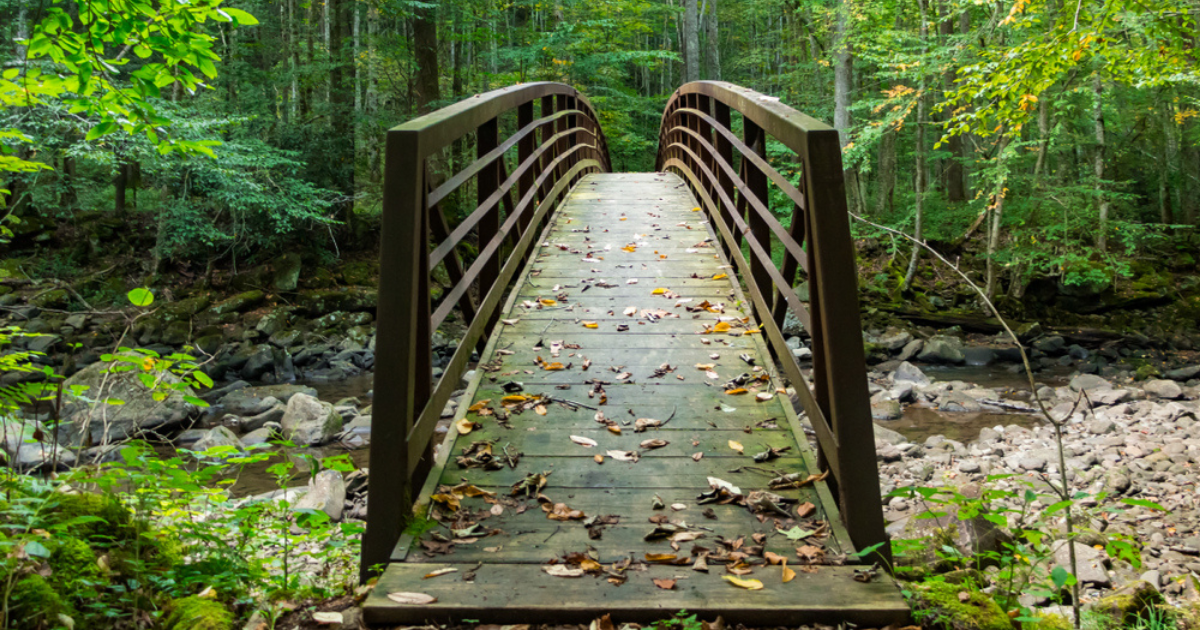 HERE's Where You Can Find the Prettiest Fall Foliage in Virginia!