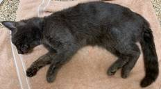 Cat Collected From Brunswick Campground Tests Positive For Rabies