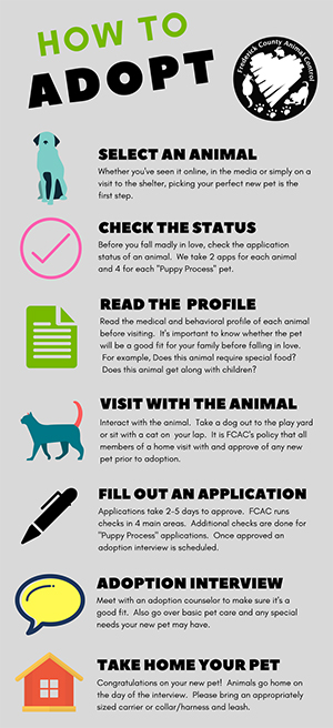 Chart showing how to adopt a pet