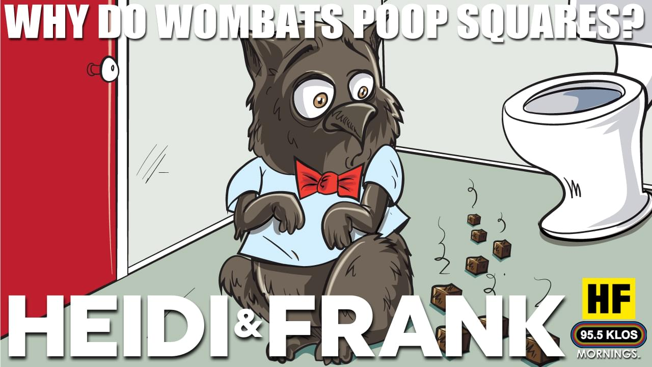Why is wombat's poop square?