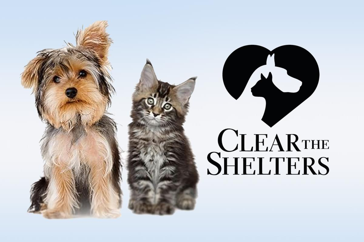 Clear the Shelters PSA Campaign