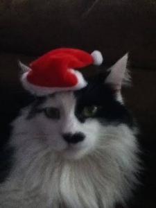 albert christmas