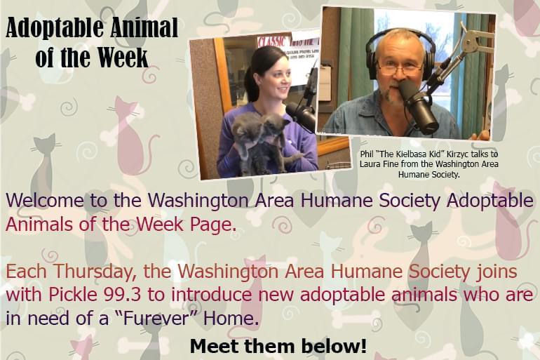 Washington Area Humane Society and Pickle 99.3