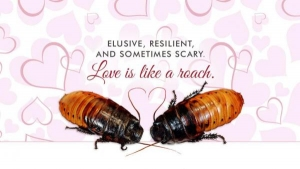 Bronx-Zoo-Name-a-cockroach-for-your-Valentine