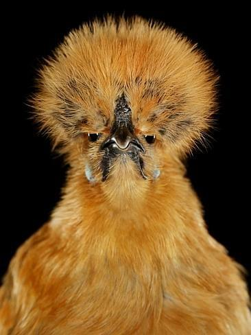 1-9-20 Chick of the Day
