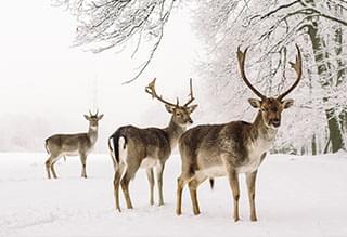 Watch: Canadian Deer Obey Stop Sign