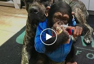 Cute Monkey and Dog are Best Friends