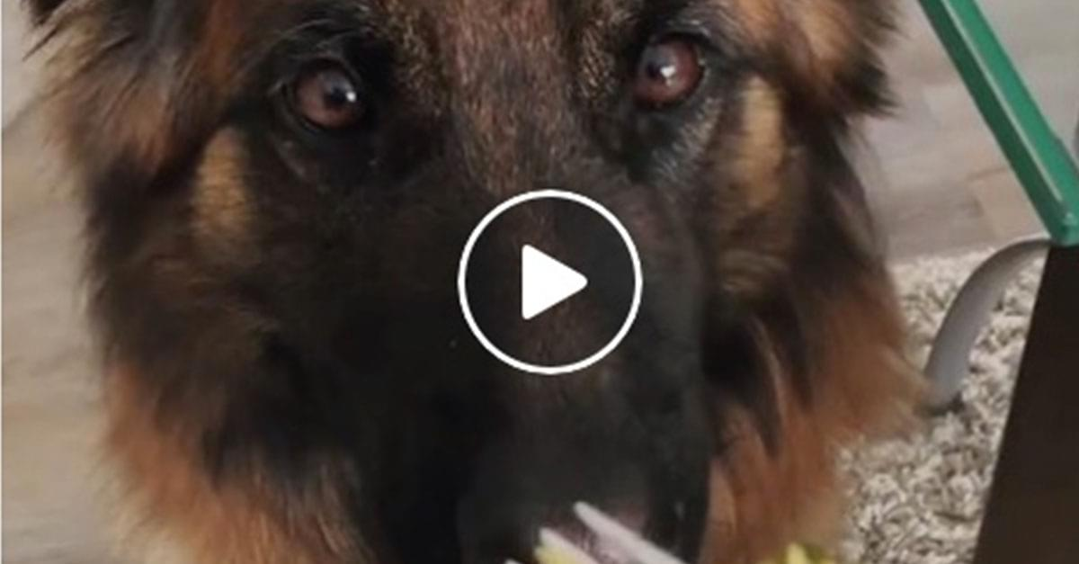 Polite dog