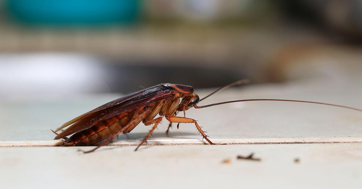 Is Cockroach Milk the Next Superfood?