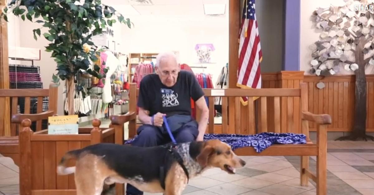 Meet the SPCA's Doggie Matchmaker