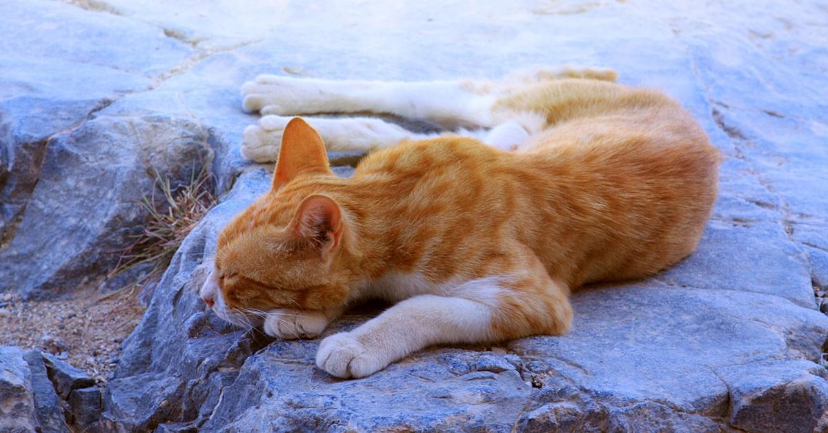 Greek Cat Sanctuary Hiring Caretaker