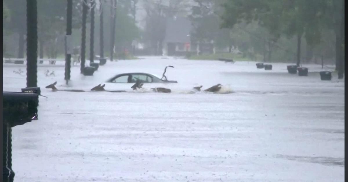 WATCH: Deer Wade Through Flood Waters