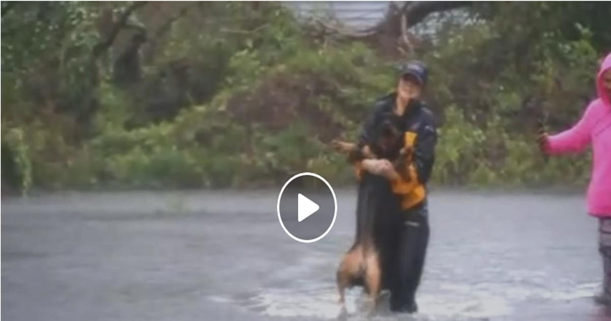 WATCH: Reporter stops broadcast to rescue dog
