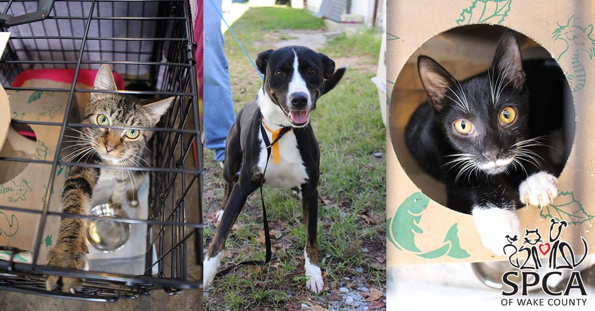 Hurricane Florence Help: SPCA of Wake County
