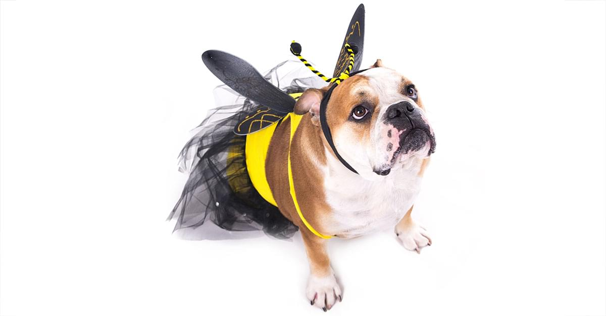"""It's National Dog Week! Zulily Unveils the Most """"Pup-ular"""" Pet Costumes for Halloween"""